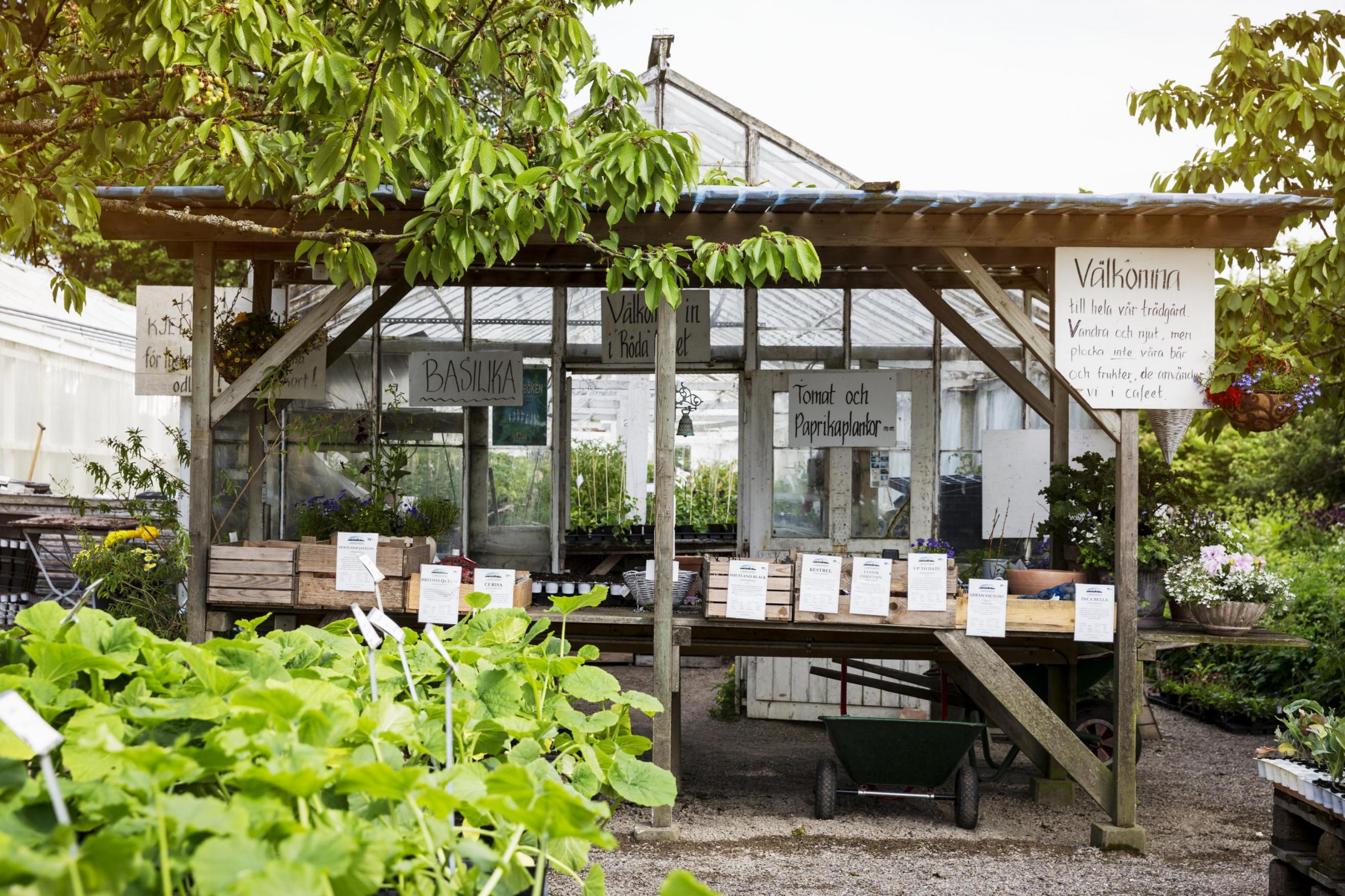 A garden with a greenhouse with vegetables and spices for sale