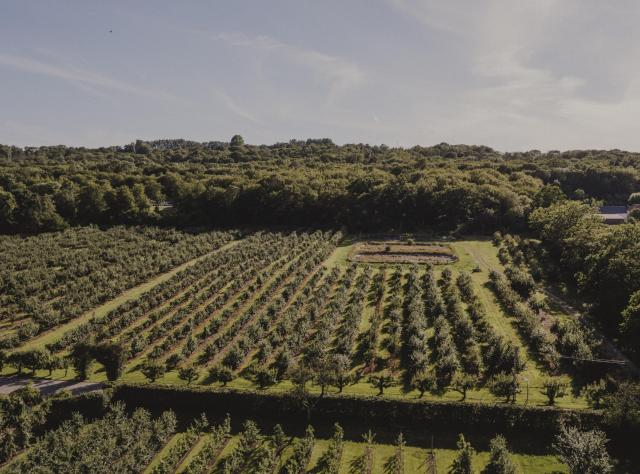 A view from above of the apple plantations at Kiviks Musteri